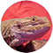 Bearded Dragon Care Info logo